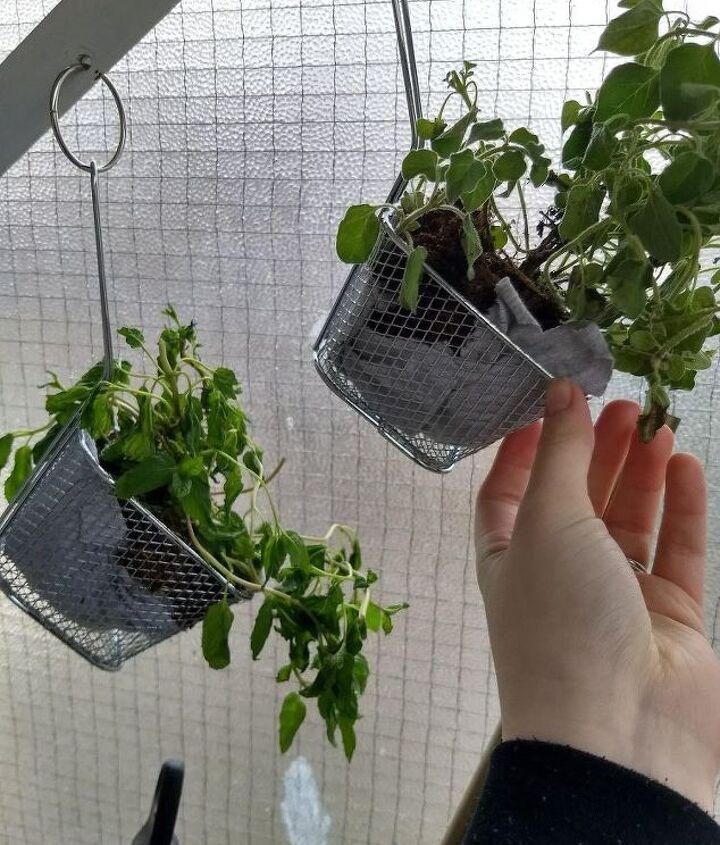 a starter herb garden for an apartment bound gardening newbie