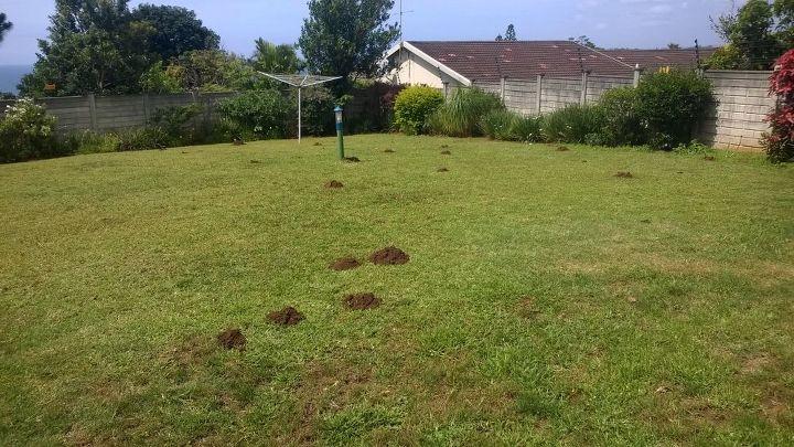 q how can we get rid of moles