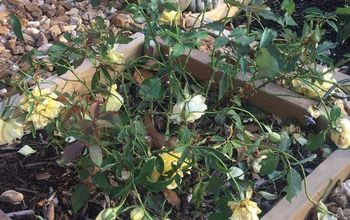 How to Build a Rose Garden