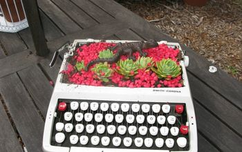 garden junk typewriter with succulents