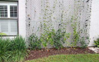 how to make your landscaping stand out from your neighbors