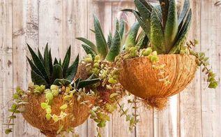 broken wine glasses turned into coconut planters