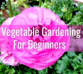 Beginners Guide To Growing A Vegetable Garden From Seeds
