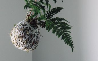 add houseplant whimsy with these diy moss string gardens, Hang it up