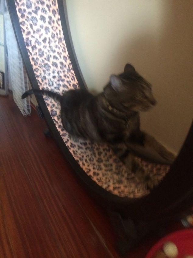 q cat wheel