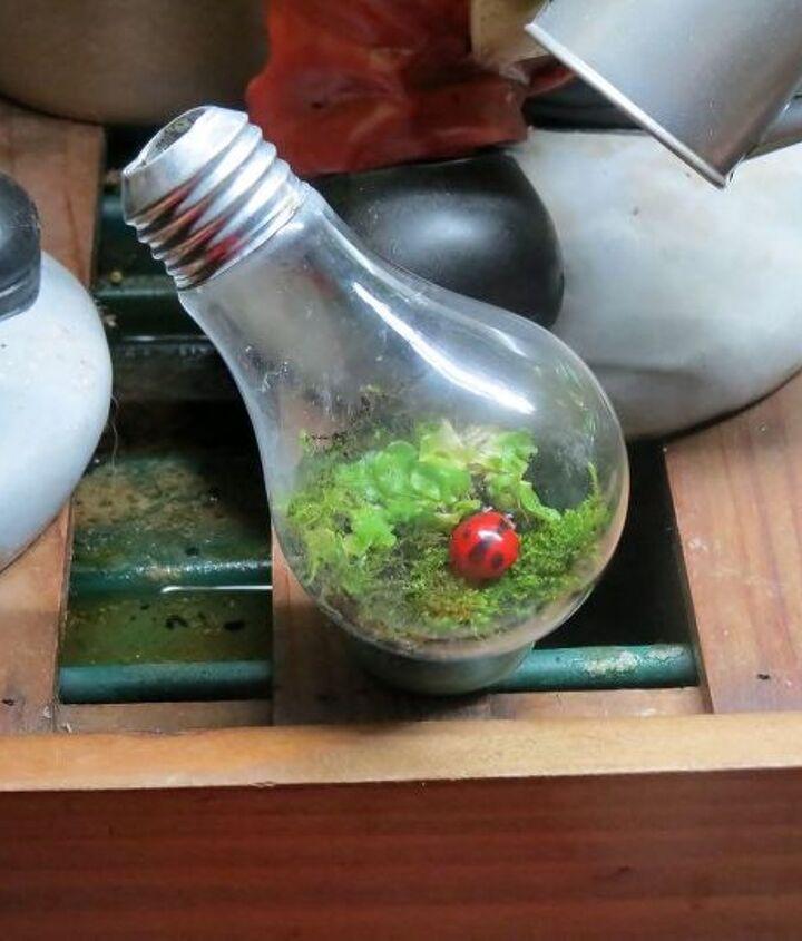 s 18 clever ways to repurpose old light bulbs, Light Bulb Terrarium