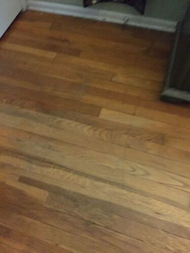 I Have Rescue Cats And Dogs In My Home And My Wood Floors Look It - How to refresh hardwood floors