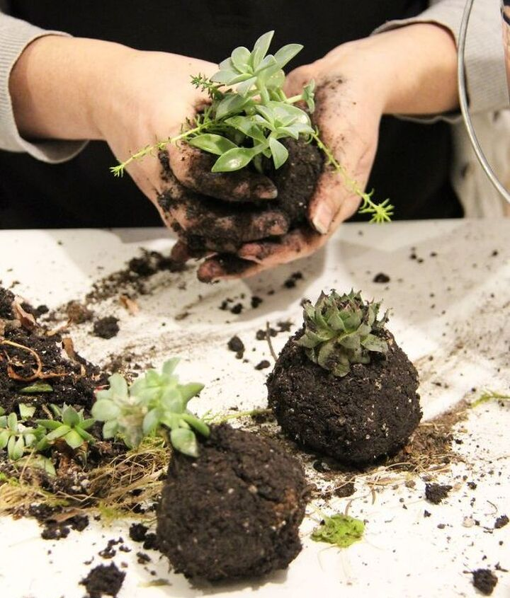 Form a ball around the plant roots