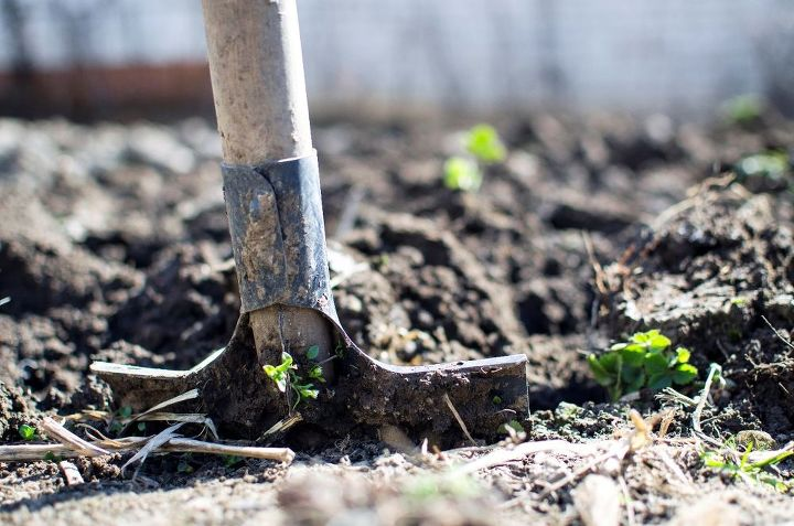 gardening tips on transplanting seedlings