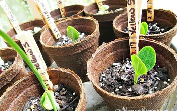 gardening tips on transplanting seedlings