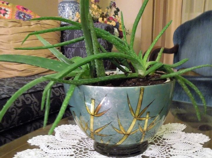 caring for your aloe vera plants a natural medicine chest