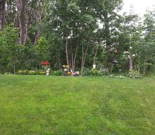 q have a forest in our back yard