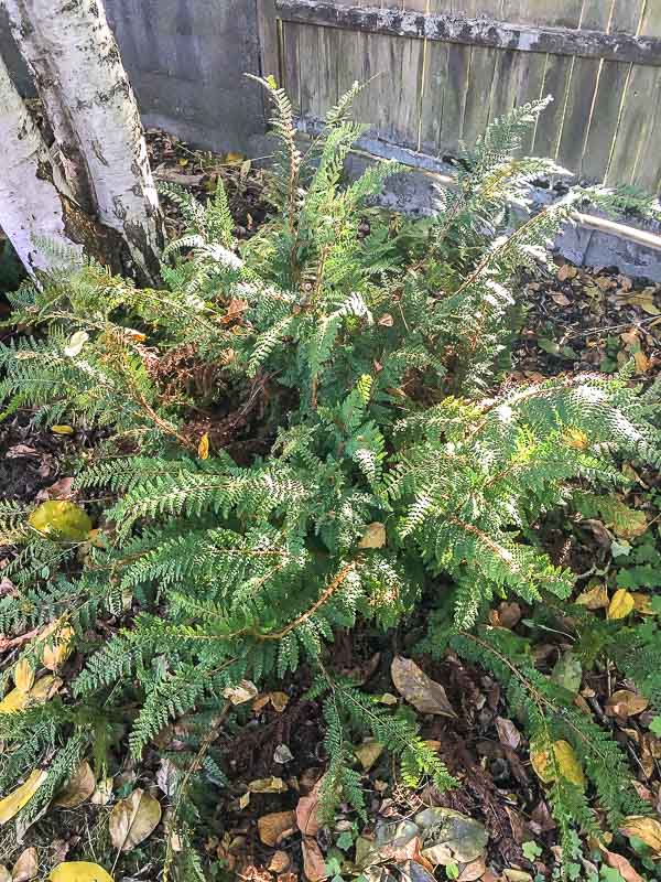 get more ferns for free