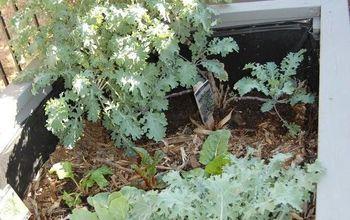 a budget friendly garden