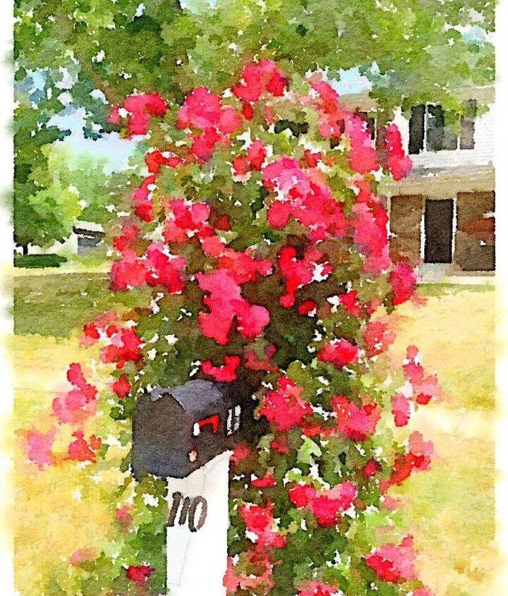 q should i cut the limbs down on my rose bush this spring