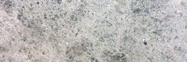 q lichen on patio