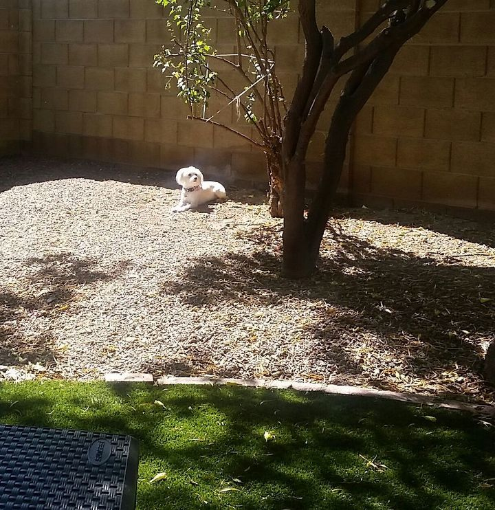 q we have gravel in our backyard which is now sparse trying to decide