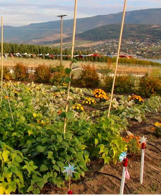 3 types of gardens for new vegetable gardeners, Flat Earth Gardens Grow in the Ground