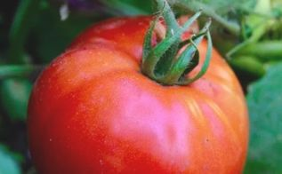 how i choose what to grow in my vegetable garden