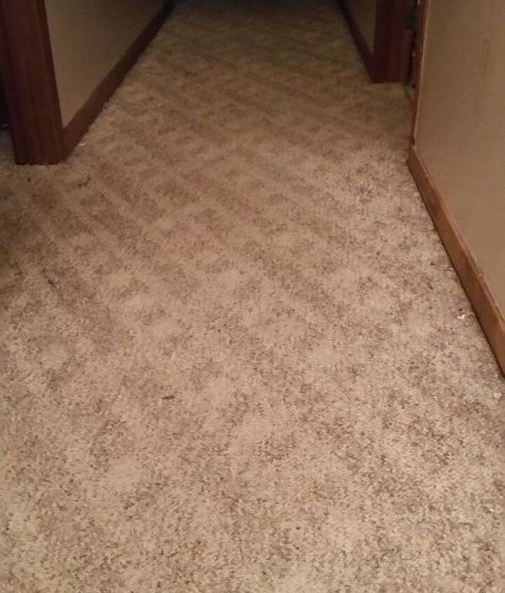 q we have carpet dogs cheapest best flooring to replace carpet