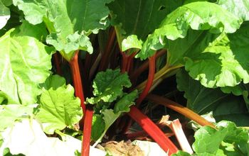Rhubarb - Growing & Harvesting - 8 Recipes for Cooking Rhubarb
