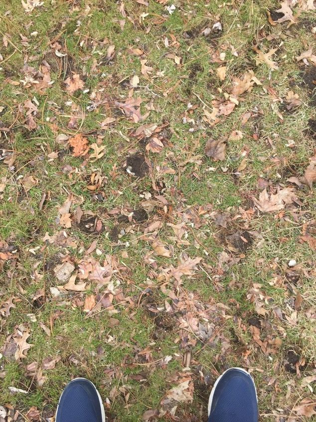 q my grass has black circles looking like holes