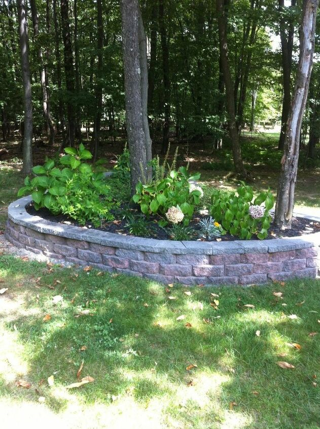 q trouble getting shrubbery to grow in raised beds any suggestions
