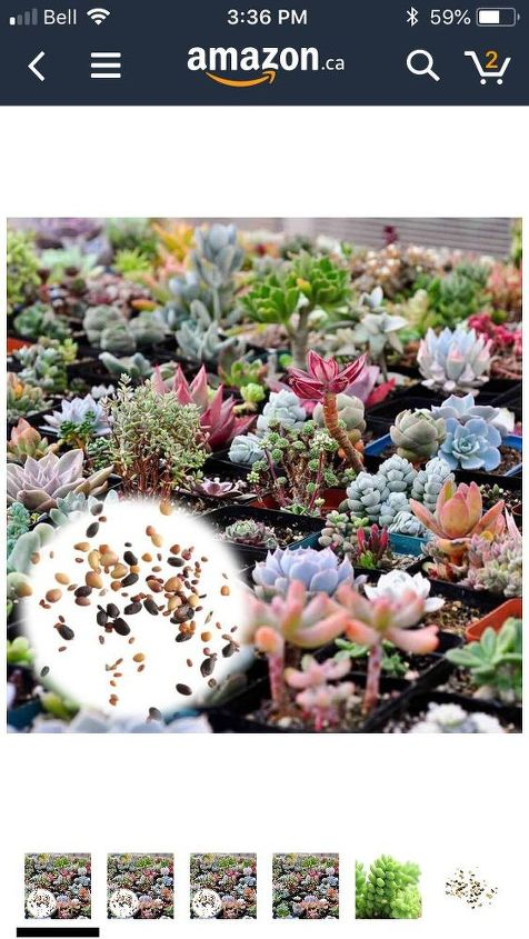 How To Grow Succulents From Seed Hometalk