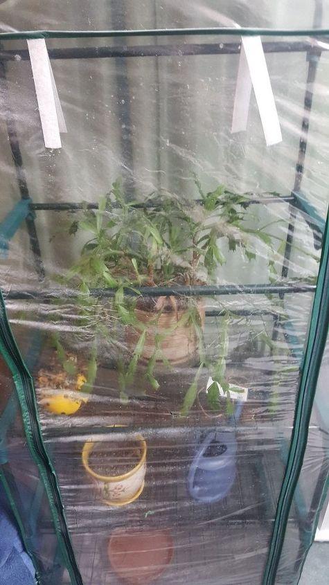 q enclosed window greenhouse