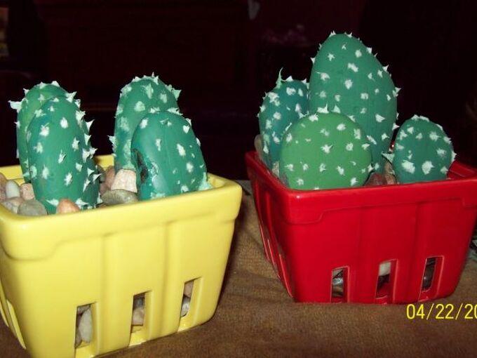 perfect succulent prickly pear cactus
