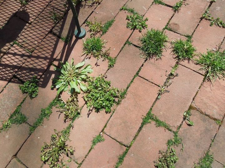 Weeds on my patio!  Looks so bad!