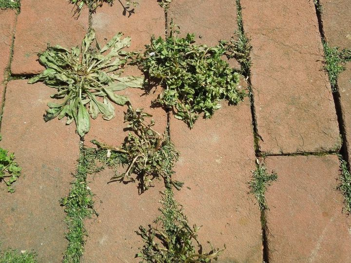 The weeds are already dying after 1 1/2 hour!