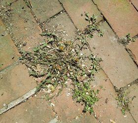 DIY Natural Method for Killing Weeds | Hometalk