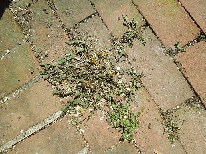 a natural method for killing weeds