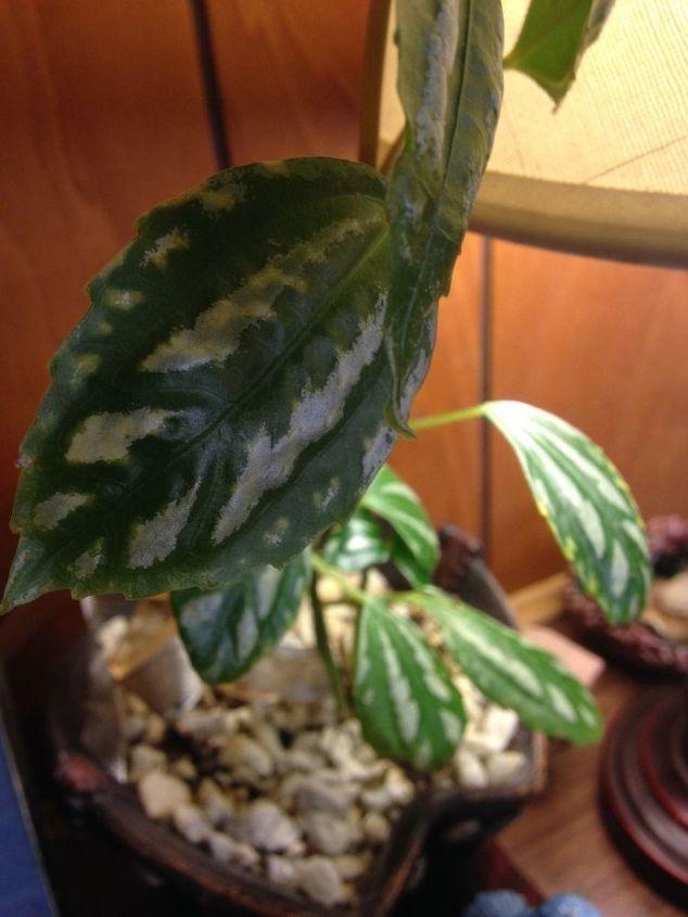 q i need help identifying this plant