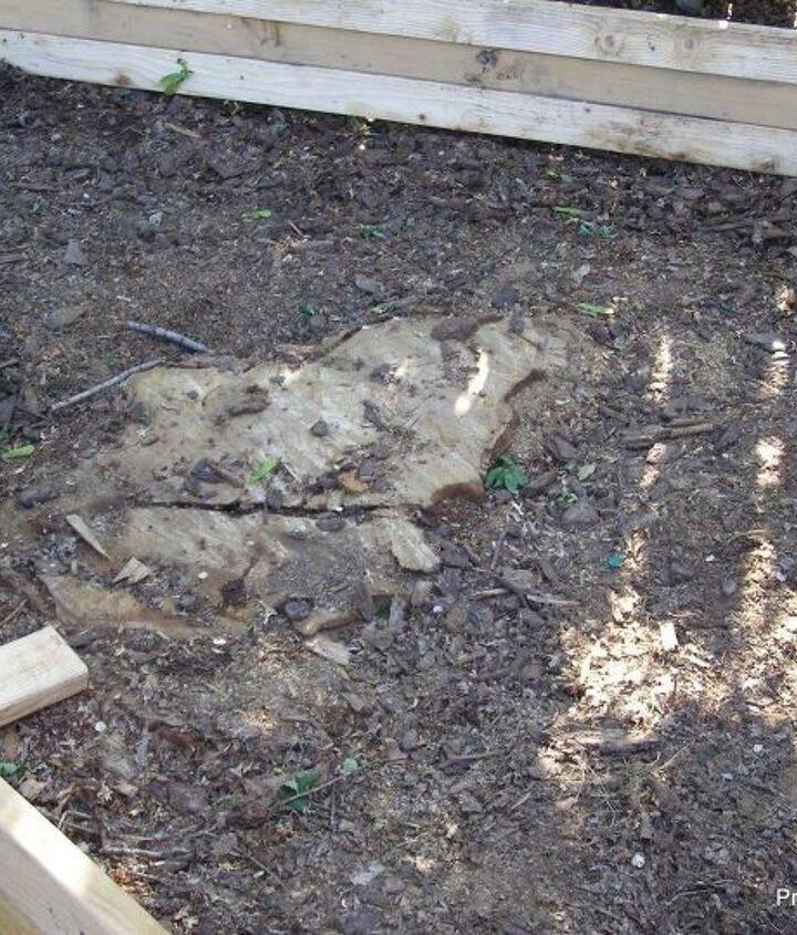 diy backyard garden raised bed