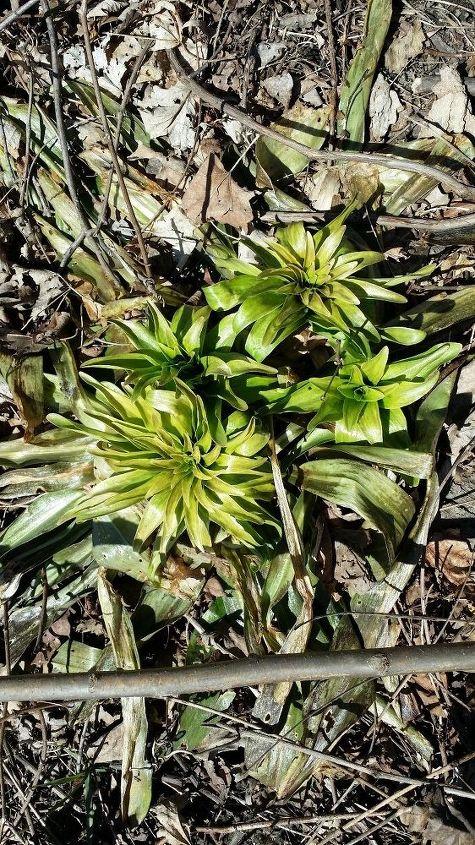q identify plant