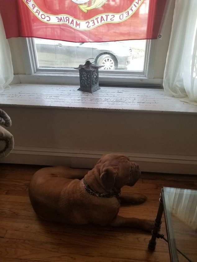 q possible window seat for my guard dog