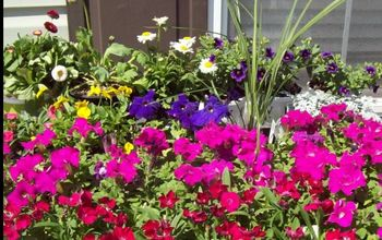 Mini Garden of Flowers or How to Make a Mini-garden