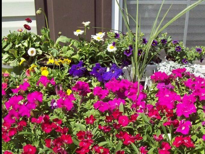 mini garden of flowers or how to make a mini garden