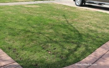 Got Snow Mold on Your Grass? Here's How to Repair It!