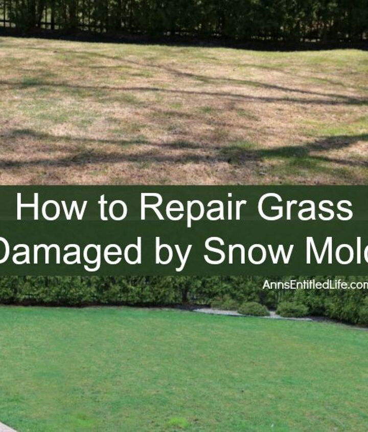 got snow mold on your grass here s how to repair it