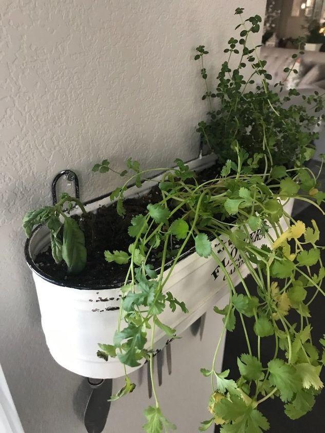 q herb garden