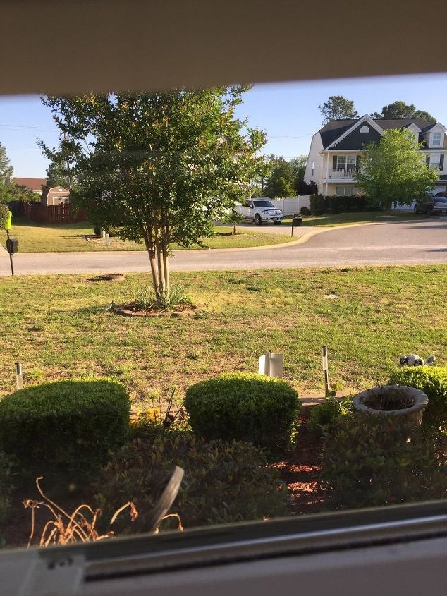 q live in s carolina my lawn mostly weeds now should i reseed or sod