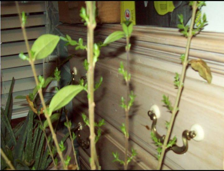how to get a mini garden produce maximum fruit