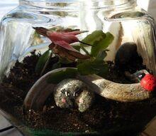 terrarium for a teenager