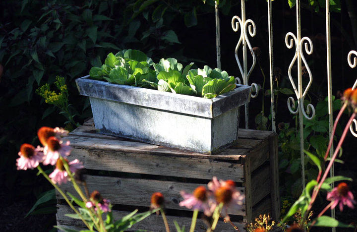 s 15 container garden ideas to kick off spring, Container Water Gardens
