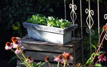 12 Container Garden Ideas to Kick Off Spring
