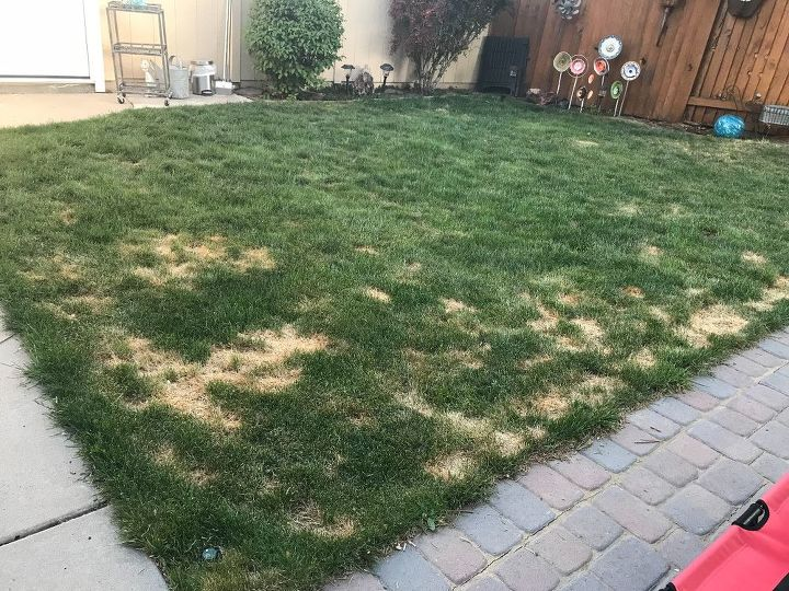 q how to fix grass ruined by pet urine