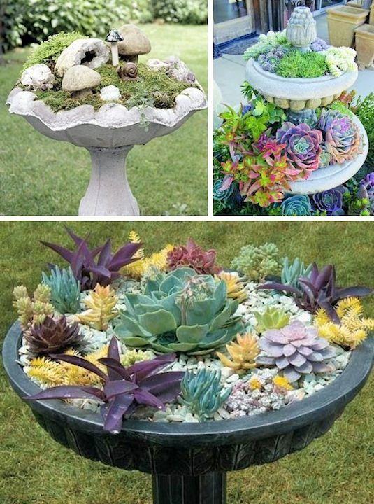 q succulent garden advice